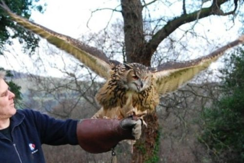 falconry-experience-wales-1920x1080-resize